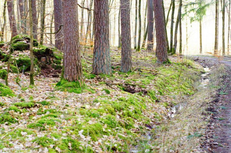 Landkreis Bad Kissingen sucht neue Naturschutzwächter