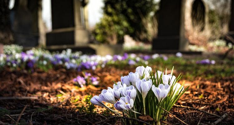 Friedhofsandachten an Allerheiligen